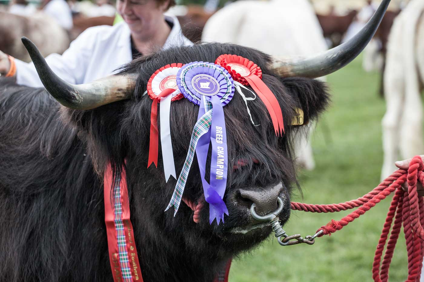 Surrey County Show Results